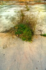 Conceptual – cracked cement floor with emerging opportunistic weeds
