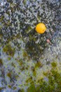 Conceptual – A lonely orange in an abandoned lot of crumbled asphalt