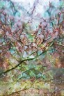 Abstract – view of colorful tree branches distorted by rain on skylite