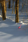 Conceptual – A plastic pink flamingo alone in a snow covered landscape