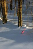 Conceptual – A plastic pink flamingo alone in a snow covered landscape
