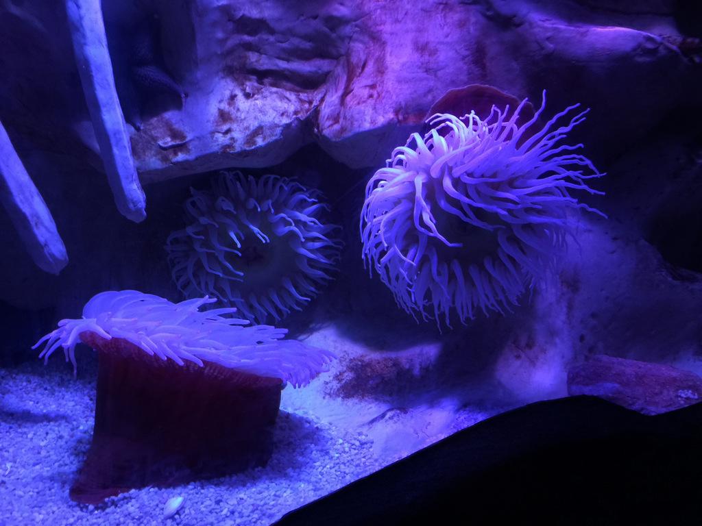 sea-life-arizona-aquarium-photo-IMG_7151