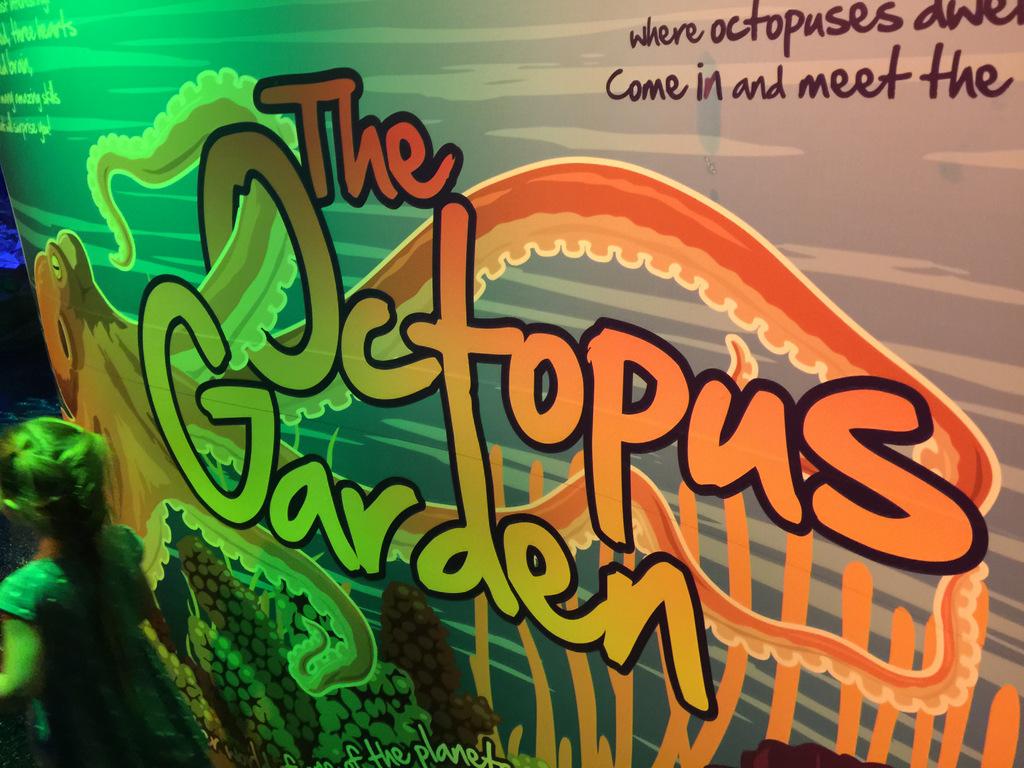 sea-life-arizona-aquarium-photo-IMG_7152