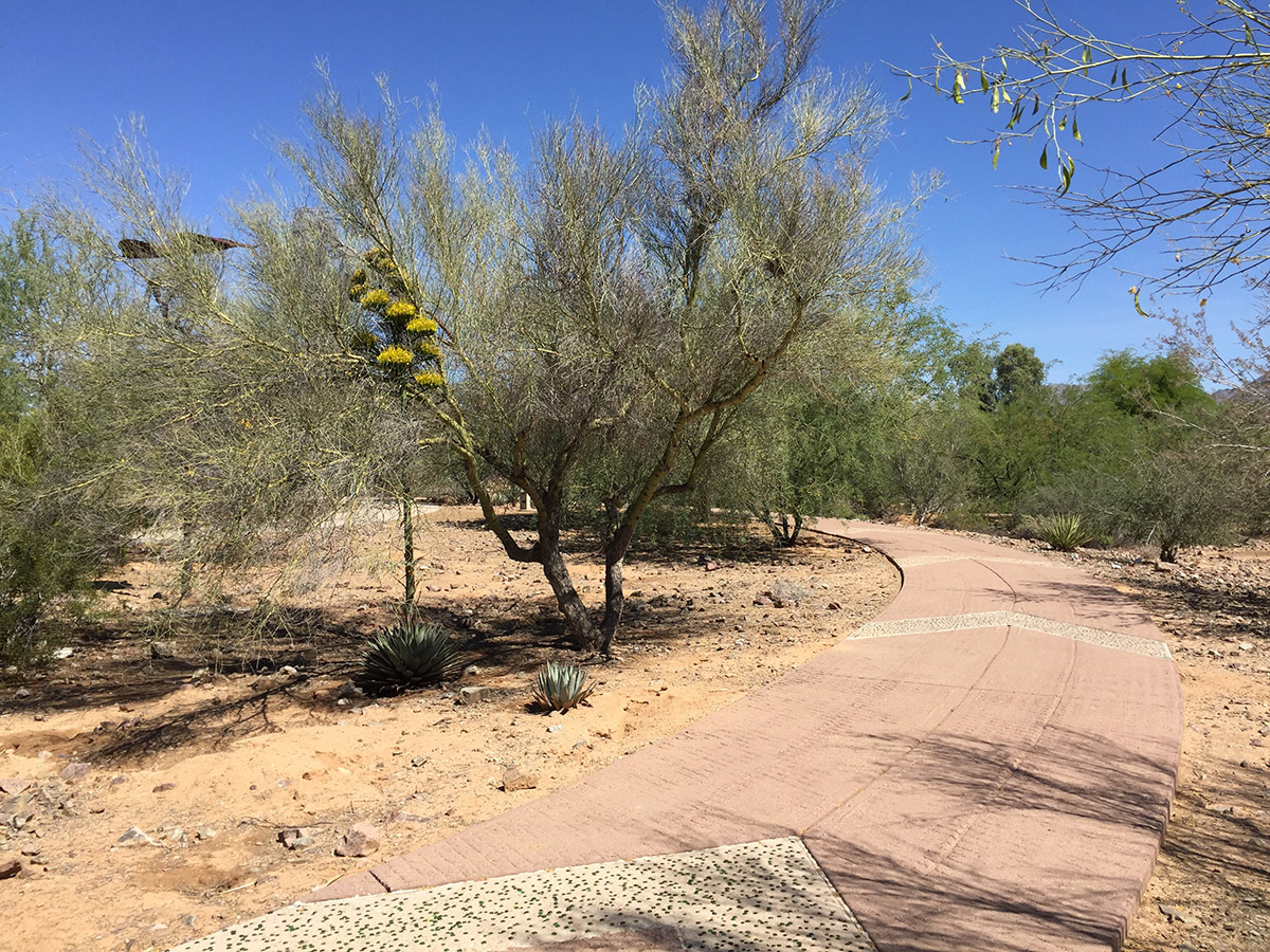 Walkway-Scottsdale-Ranch-Park