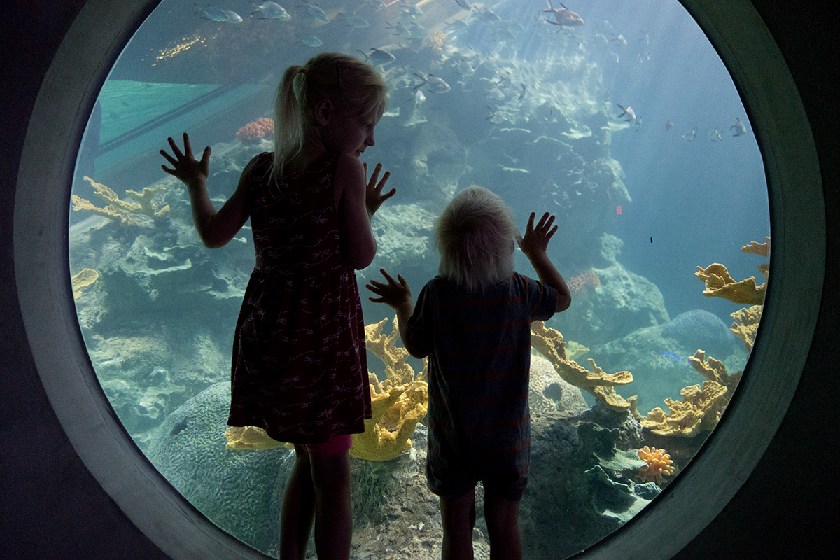 aquarium-photo