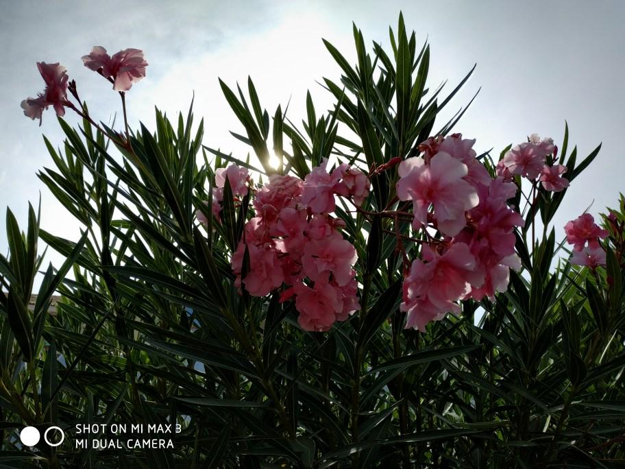 Fleurs contre jour Xiaomi MI Max 3