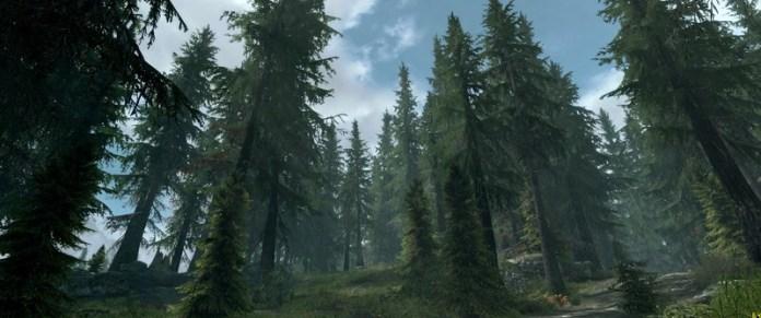 SFO Trees