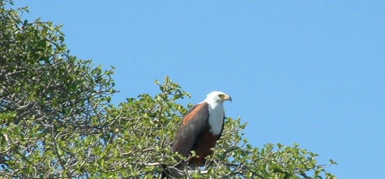 30 juli 2006 N'Gepi – Okavango delta