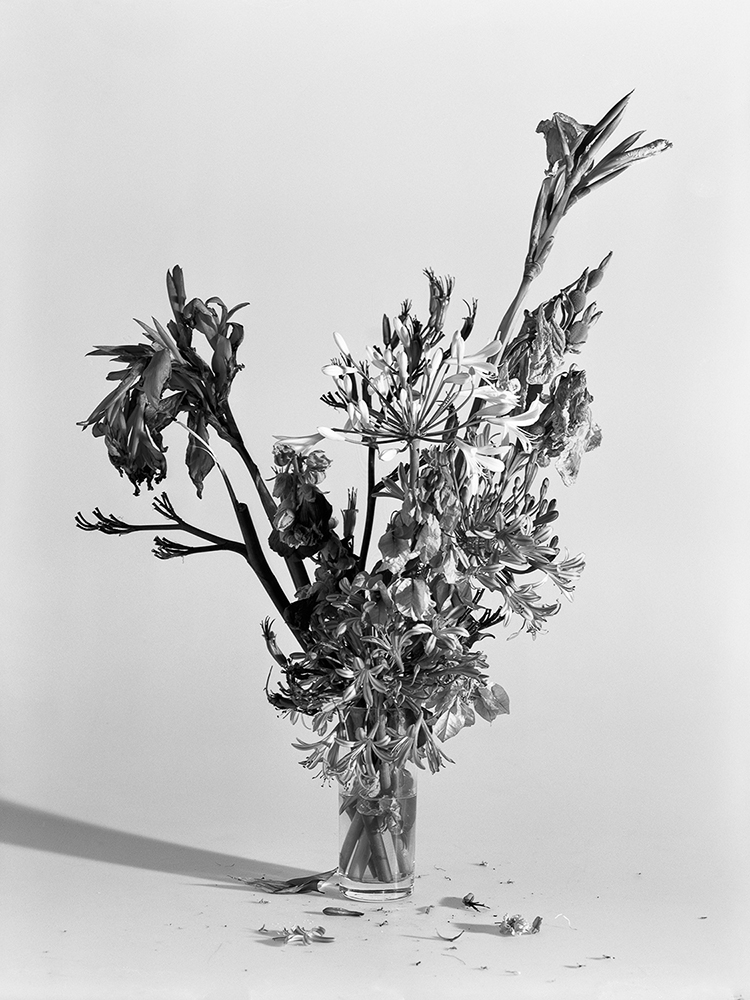 © Nádia Rodrigues Ribeiro, Untitled – 11.07.12, 2012 Silver contact print, gelatine and silver 12x9 cm
