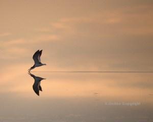 reflection-photo10