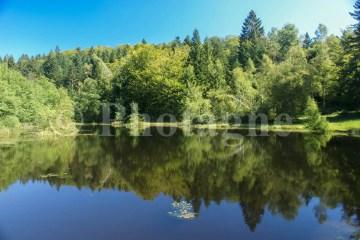 Un autre des Mille étangs...