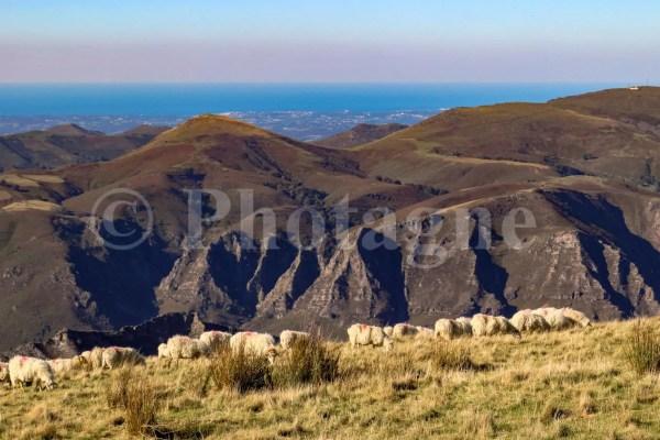 Des moutons sur la crête du pic d'Iparla