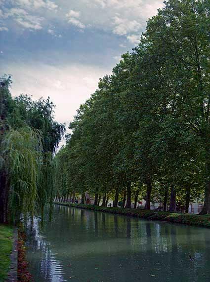 le canal sous les arbres