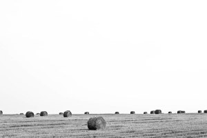 A Field in Frankonia