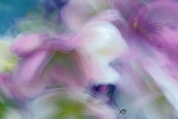 5 Impressionist Photo Techniques