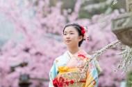 桜を背景に遠くを見つめる着物を着た女の子の写真