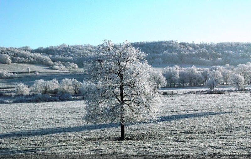 Campagne sous le givre - Paysage du massif central par -11°C [Images d'hiver]