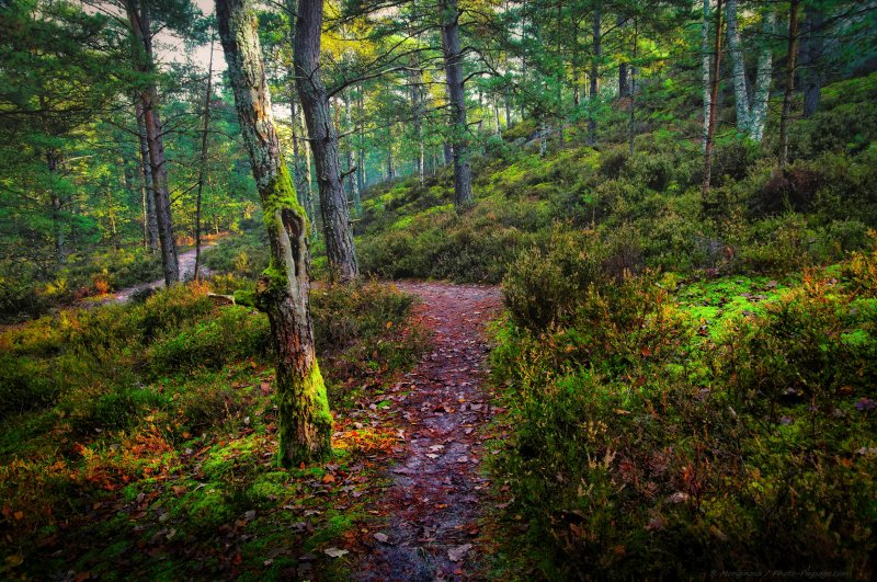 Un Matin Dautomne Sur Un Sentier Forestier Photo