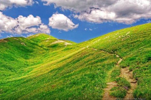 Cette superbe colline ondulée recouverte de milliers de fleurs a été photographiée à proximité du col d'Allos (2248m).