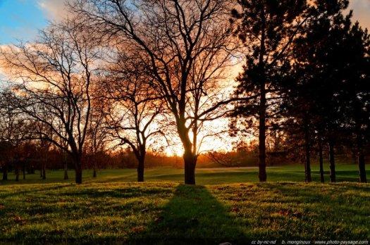 Le coucher de soleil dessine avec les arbres effeuillés en cette fin d automne des ombres rasantes sur la pelouse d'un parc
