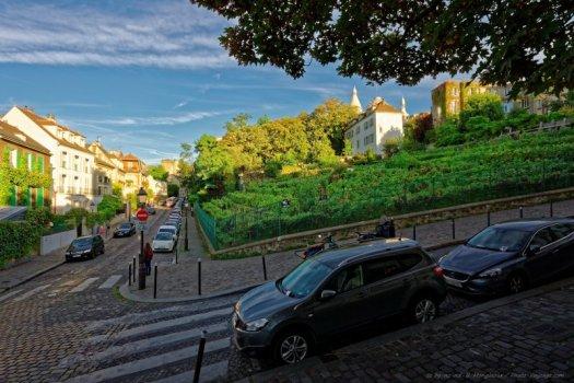 Et pour finir cette série, la célèbre vigne de Montmartre, aussi connue sous le nom de Clos-Montmartre, située au croisement des rue Saint-Vincent et rue des Saules.