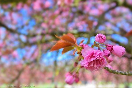 printemps photo paysage com photo