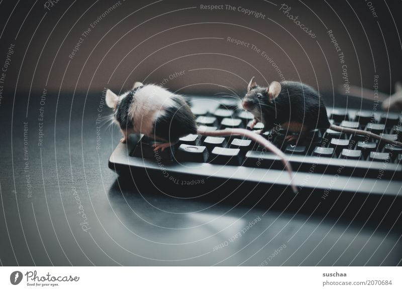 Animal Funny Fear Office A Royalty Free Stock Photo From