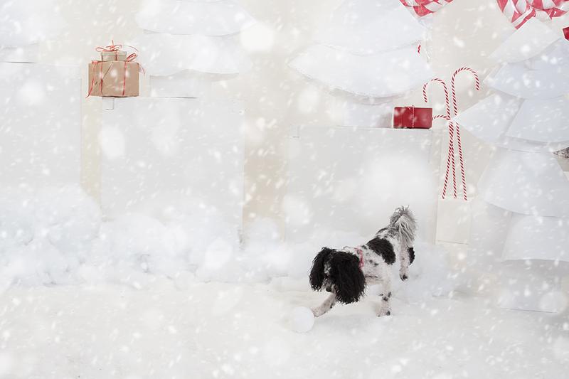 Christmas Pet Portraits Vancouver