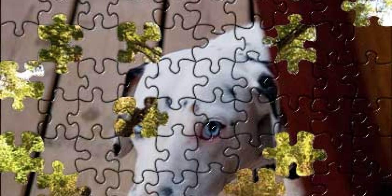 Photomontage au dalmatien