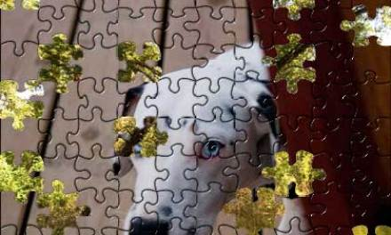 Photomontage au dalmatien