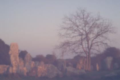 arbre brut