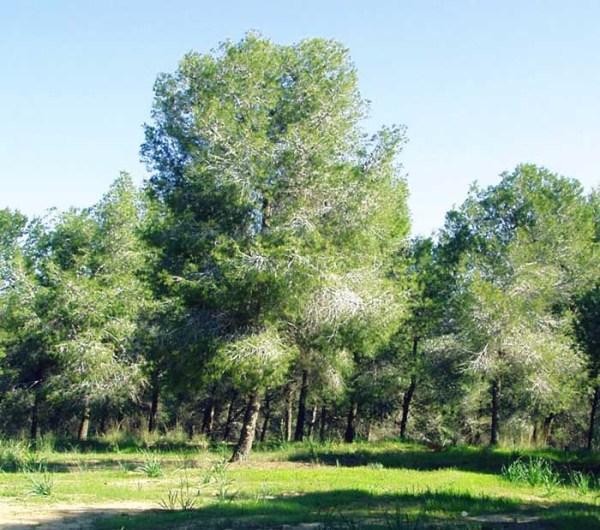 Фото Весенний лес - фотограф Влад Новиков - жанр, природа ...