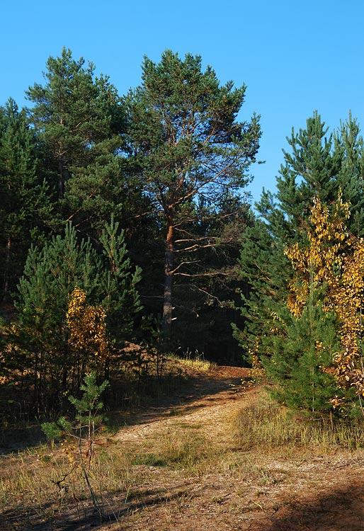 Фото На опушке зелёного леса (осень) - фотограф ...
