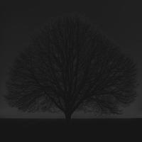 baum 1 - PHOTOGALERIE WIESBADEN - dunkel-schwarz