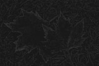 blätter 5 - PHOTOGALERIE WIESBADEN - dunkel-schwarz