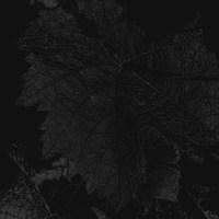 blatt 3- PHOTOGALERIE WIESBADEN - dunkel-schwarz