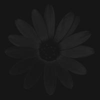 blume 1 - PHOTOGALERIE WIESBADEN dunkel-schwarz