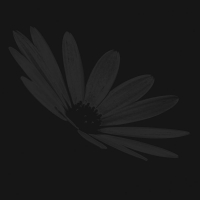 bäume 2- PHOTOGALERIE WIESBADEN - dunkel-schwarz