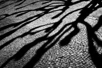 schatten an der wilhelmstraße (sw) - PHOTOGALERIE WIESBADEN - wiesbaden - impressionen 2
