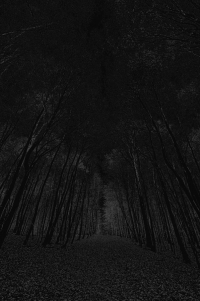 waldweg - PHOTOGALERIE WIESBADEN - dunkel-schwarz