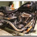 Harley #7