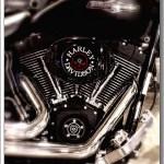 Harley #3…Black