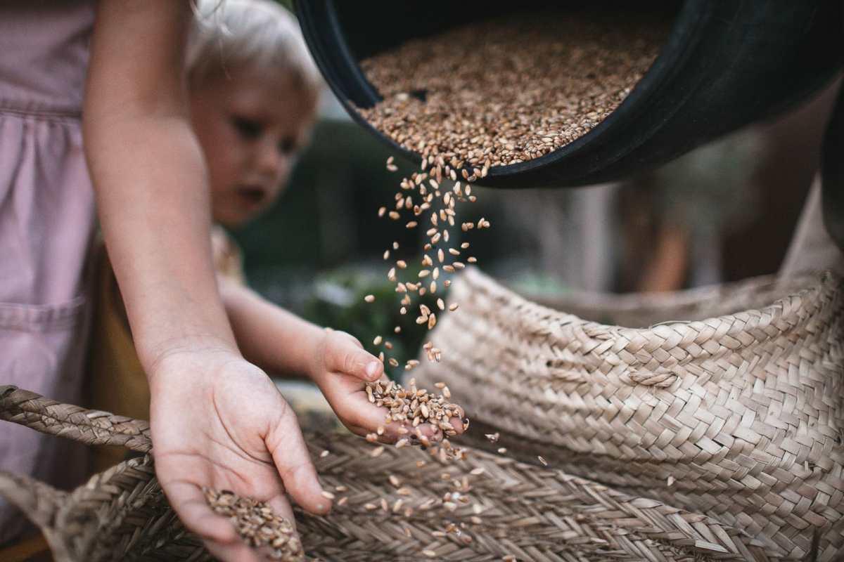 Detalle fotográfico de dos niños jugando con semillas de trigo