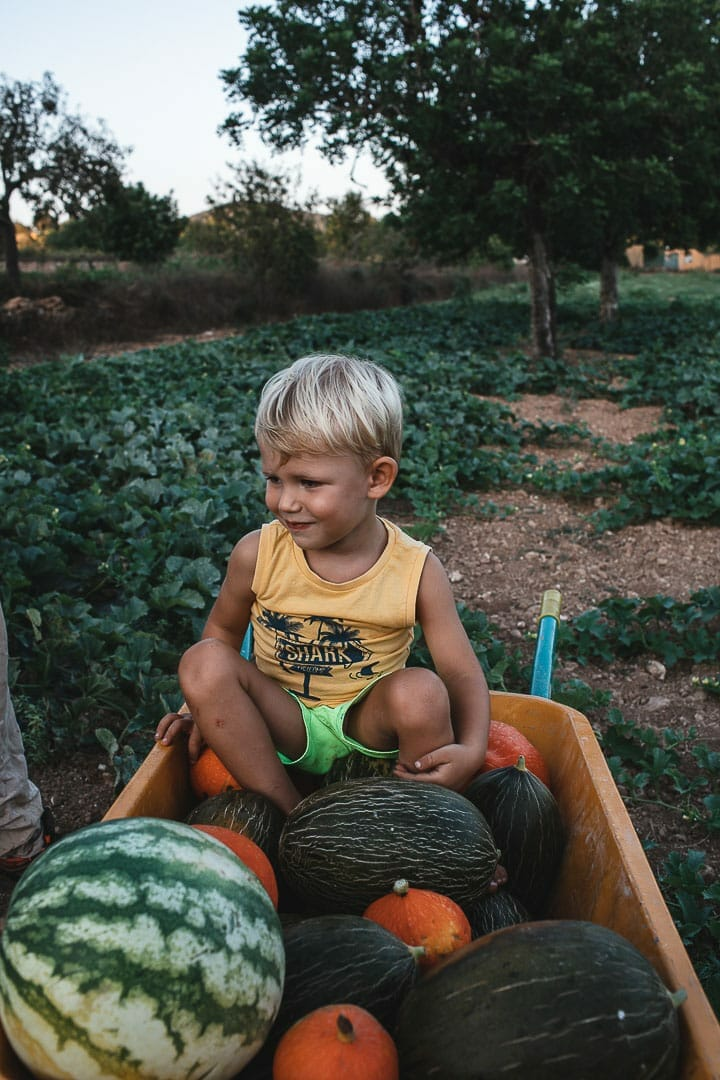 Fotografía de un niño sonriente sentado sobre la carretilla calabaza y melones en la huerta de Can Puvil de Ibiza