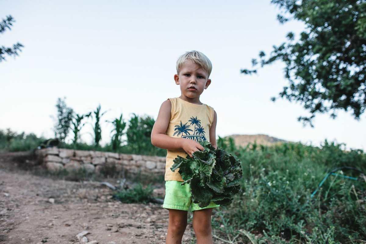 Fotografía instantanea de un niño sosteniendo una lechuga caminando alrededor del terreno cosechado