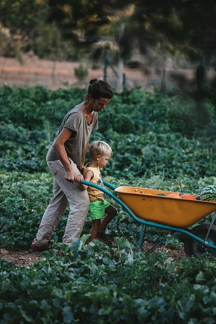 Imagen de una payesa con su carretilla con verduras y su hijo durante la cosecha en Can Puvil
