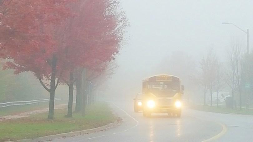 fog in the fall