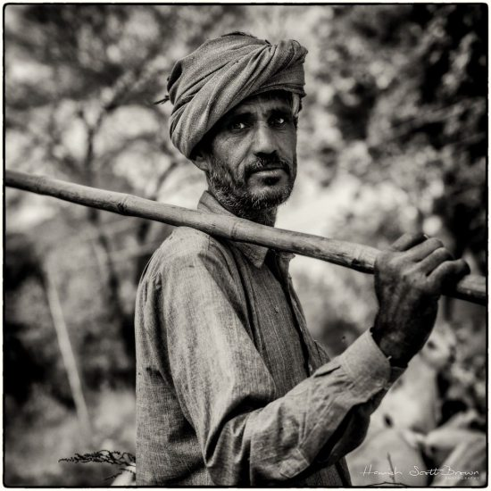 a shepherd and goatherd in rajasthan
