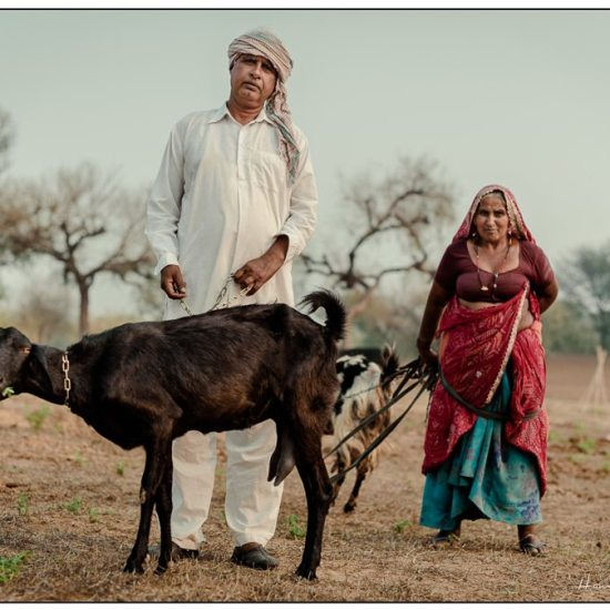 farmer and goat in rajasthan