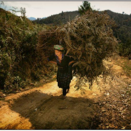 hmong woman, mu cang chai